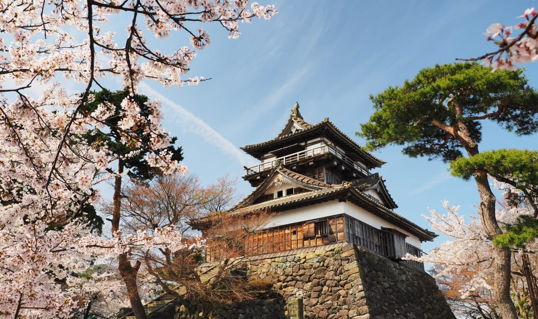 Japanese castle framed by cherry blossom and trees