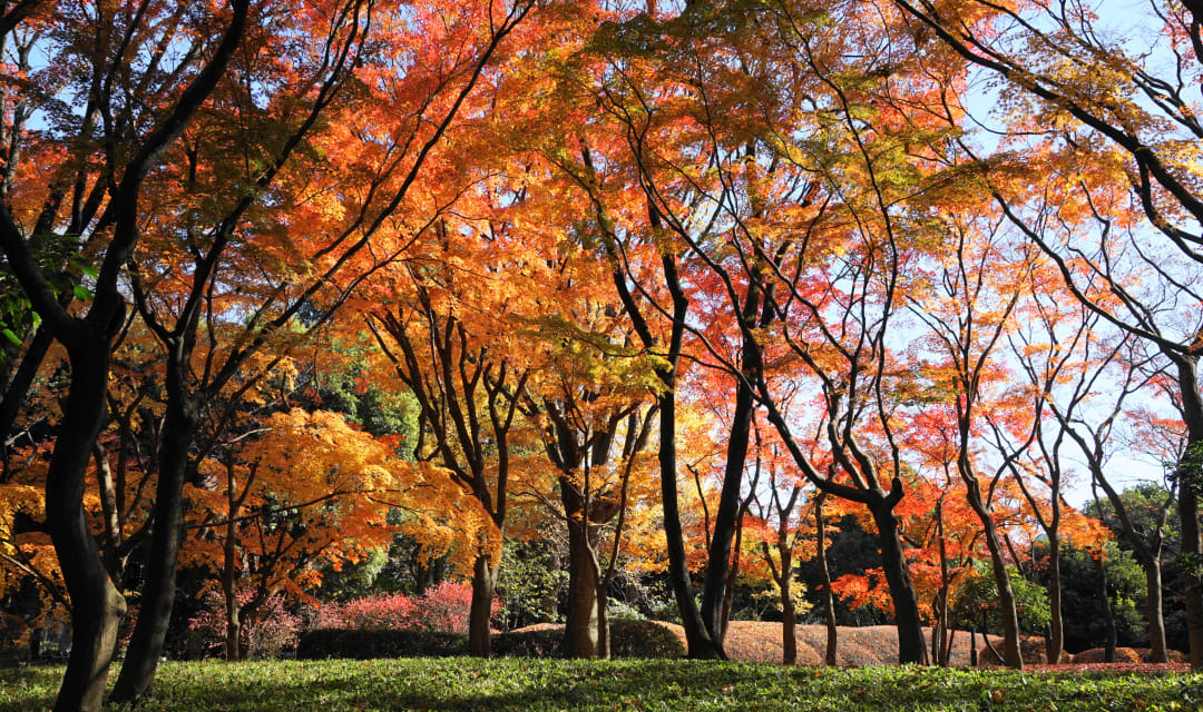 colorful autumn trees in a park