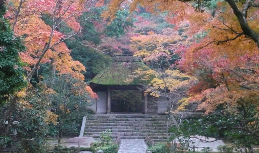 colorful autumn leaves surrounding a thatched temple gate