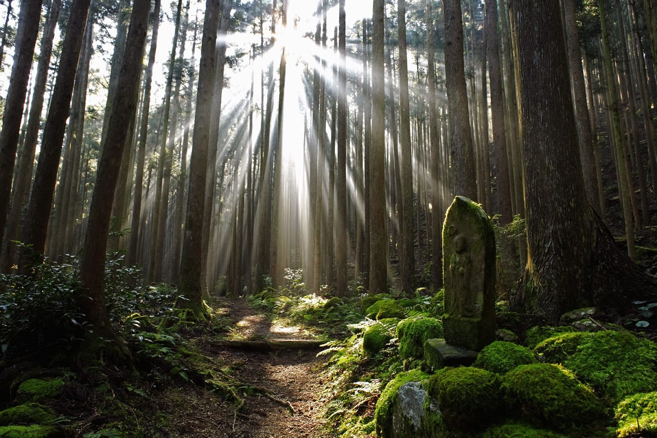 Spirituelle Erfahrung auf den Pilgerwegen des Kumano Kodo auf der Halbinsek Wakayama