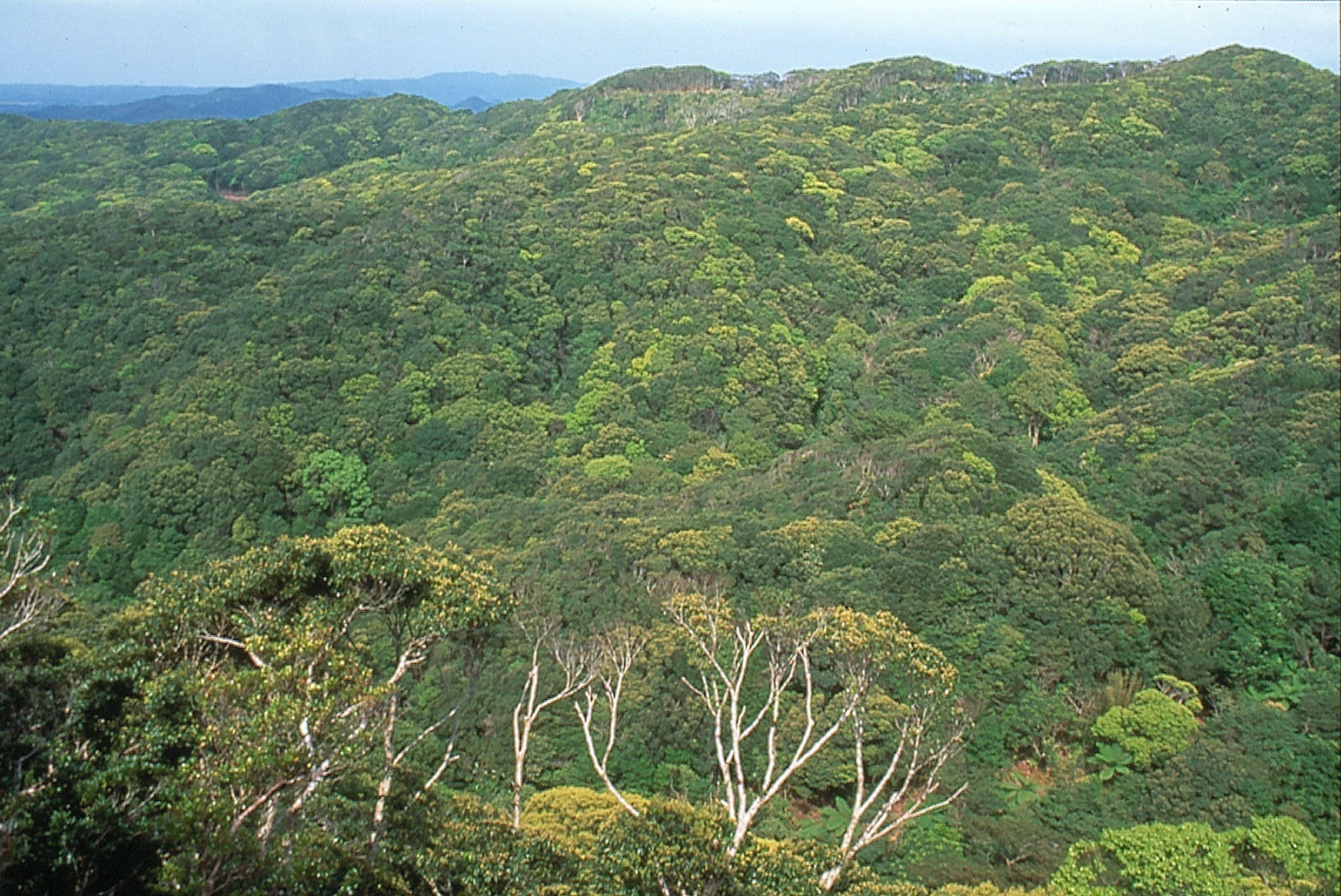 Yanbaru Urwald auf Japans Urlaubsinsel Okinawa