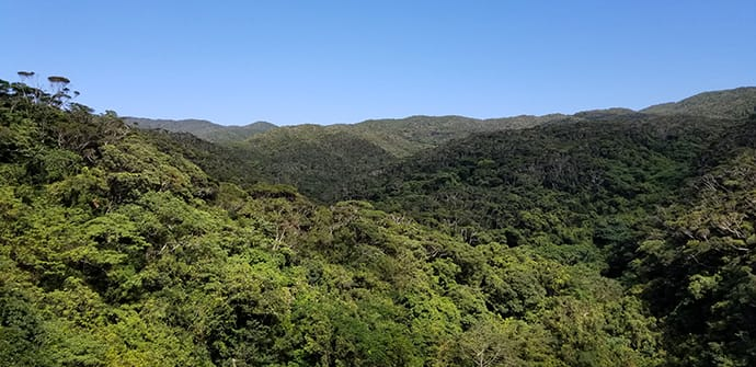 Yanbaru is dominated by a large evergreen forest—a phenomenon in a subtropical climate