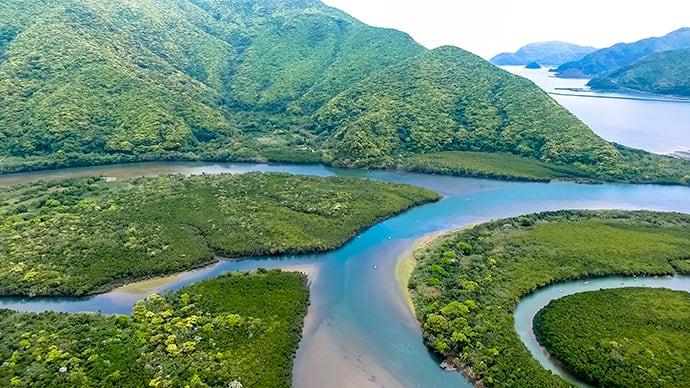 The mangrove forests at Sumiyo