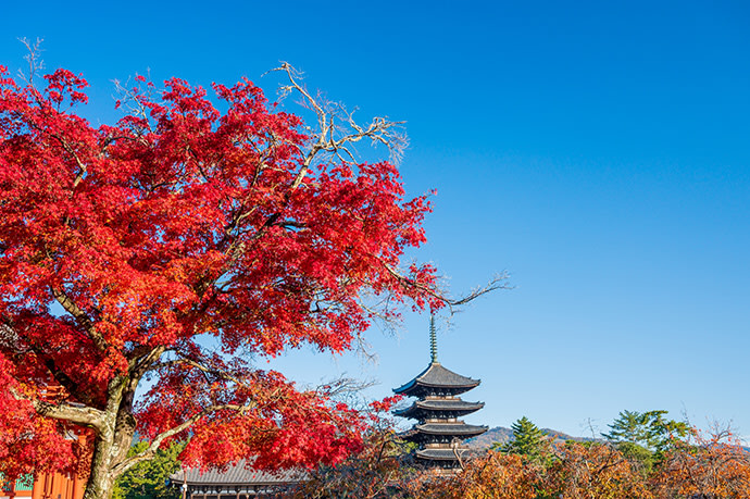 The five-story pagoda and autumn leaves at Kofukuji Temple.