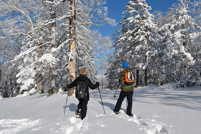 Explore the snow-blanketed forest on snowshoes.