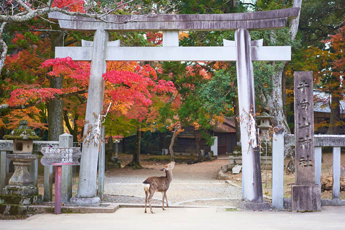 A deer in front of Tamukeyama Hachiman Shrine.