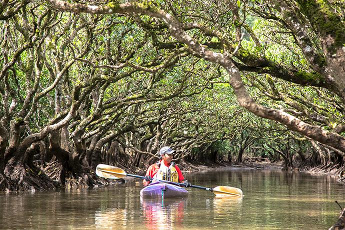 nglish-language tours through the mangroves are offered at the Kuroshio no Mori Mangrove Park