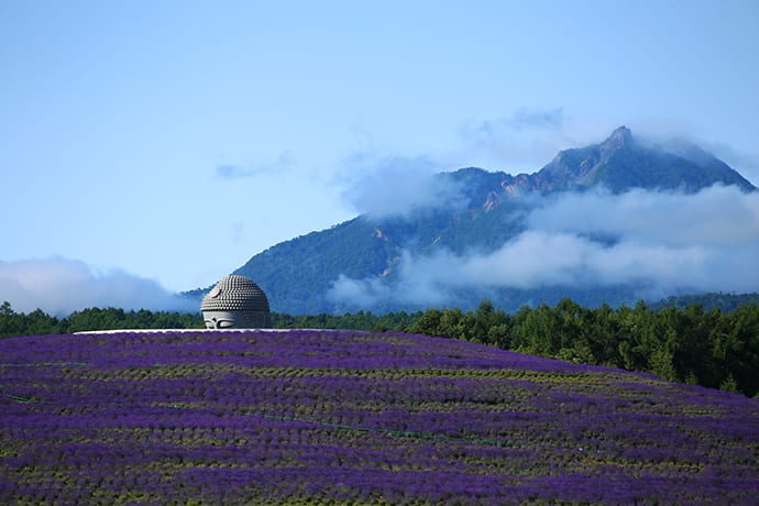 The lavender that covers the hill blooms around mid-July. Photo credit: Makomanai Takino Cemetery