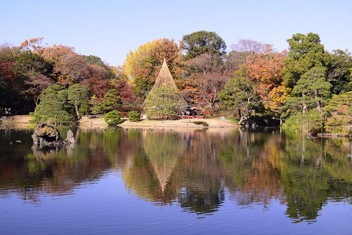 Rikugien Gardens in the fall. Around 560 trees break into fall colors in late-November.
