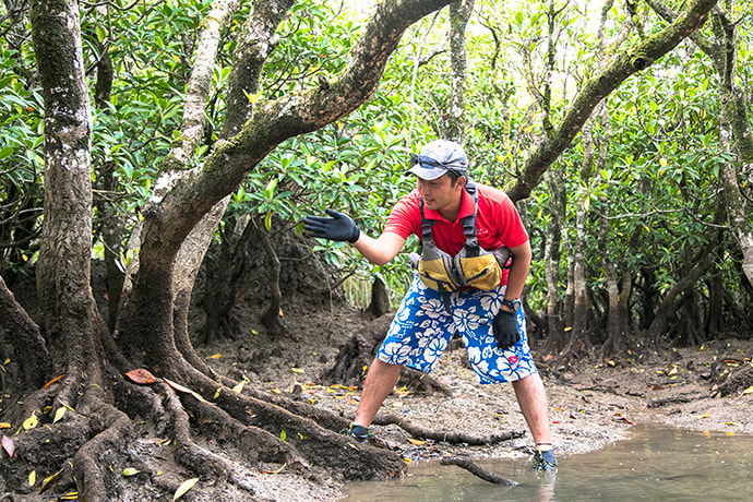 The sturdy buttress roots of the mehirugi mangrove