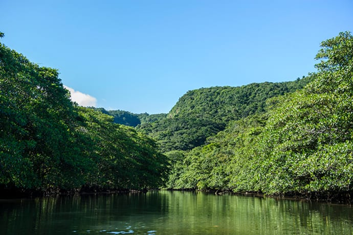 Iriomote Island is dominated by dense forest