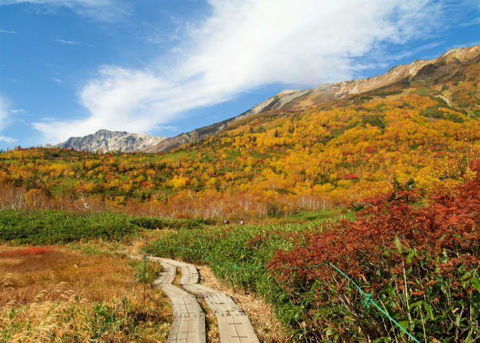 Tsugaike Nature Park Guided Nature Tour