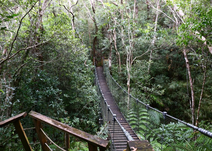 Guided Tour of Yambaru Discovery Forest