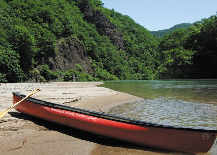 Forest Bathing from a Canoe on the Toyohira River