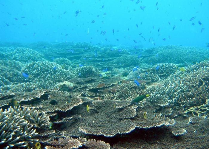 Explore Kushimoto Marine Park's Coral Reef Communities