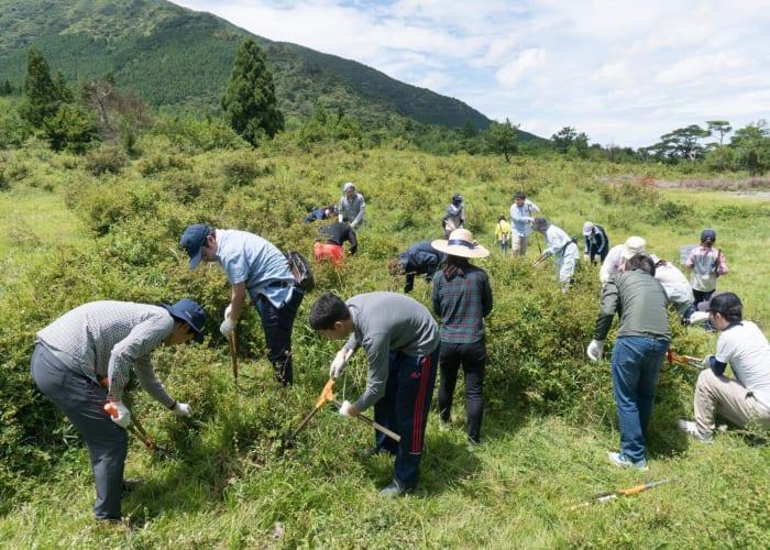 A Day of Miyama Kirishima Azalea Conservation