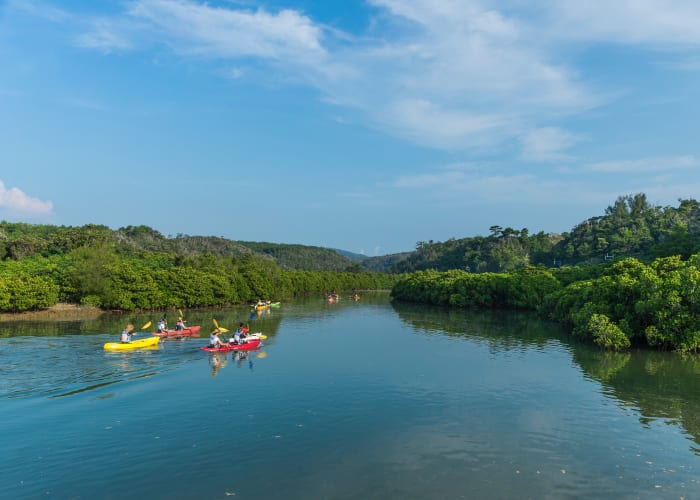 Explore an Expansive Mangrove Forest by Canoe