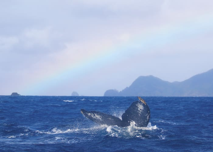 Whale Watching in the Keramashoto Islands