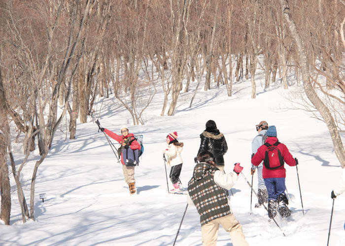 A Snowshoe Expedition Through an Important Forest Reserve