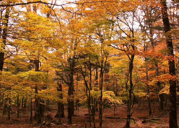 Trek Nishi-Odai's Restricted-Access Primeval Forest