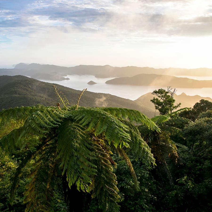 Amami-Okinawa Seeks a Place on the List of World Heritage Sites