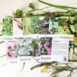 Nature Adventure Fact Cards