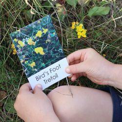 Nature Adventure Flash Cards