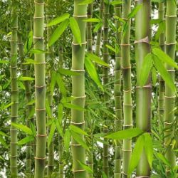 Tabitha Eve Organic Bamboo Breast Pads