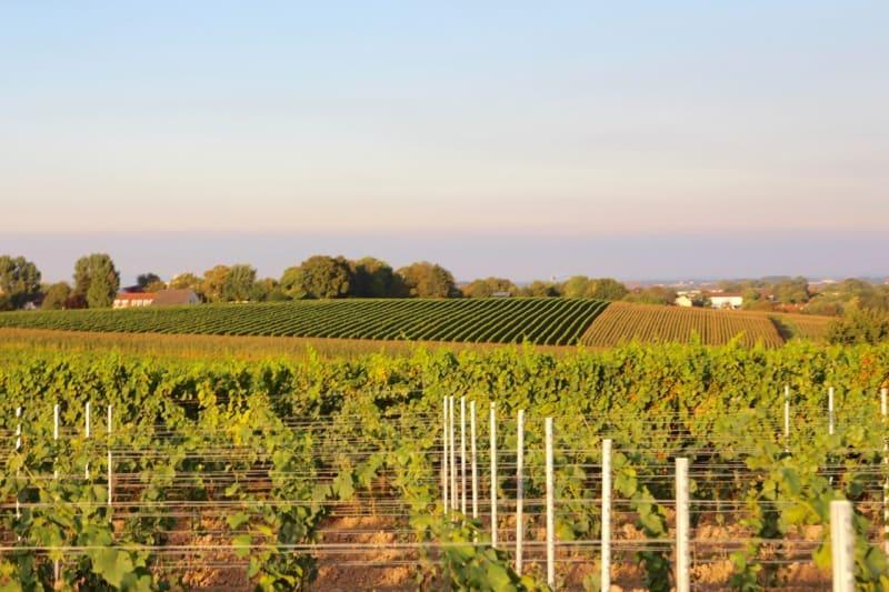 German Wine Country - A Taste of Landau and the Pfirmann Weingut