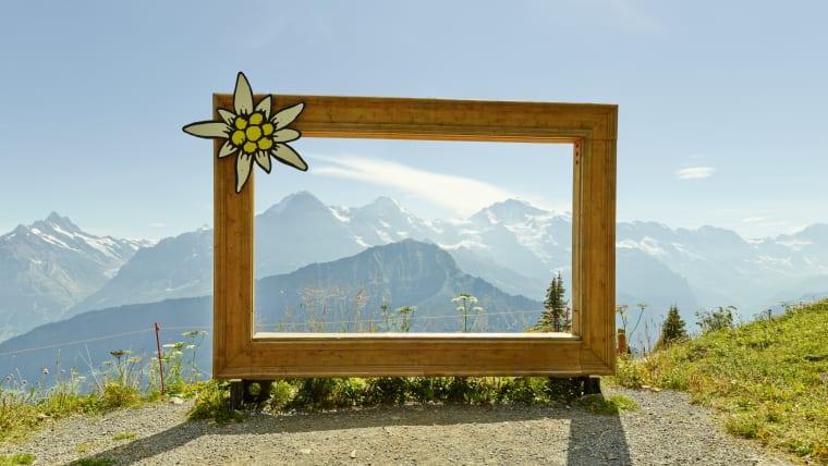 Schynige Platte Eiger Moench Jungfrau Panorama Naturkino Sommer