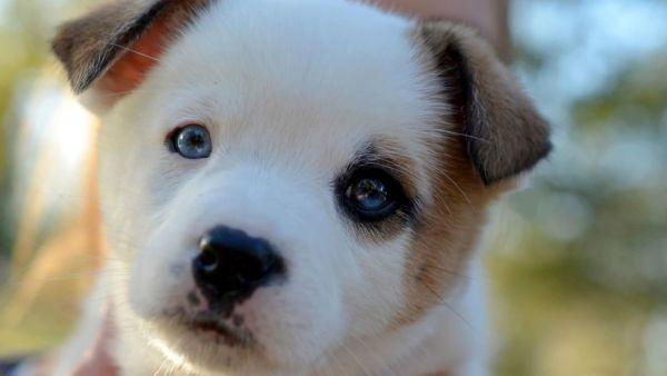 Канарские острова названы в честь собак, а интеллект взрослой собаки равен интеллекту 2-летнего ребенка. Что еще мы знаем о наших питомцах?