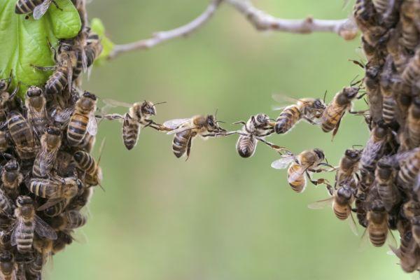 Ученые разгадали тайный язык пчел, который они используют для общения друг с другом