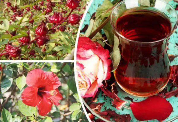Омолаживающий чай: 8 причин пить чай каркаде и его полезные свойства