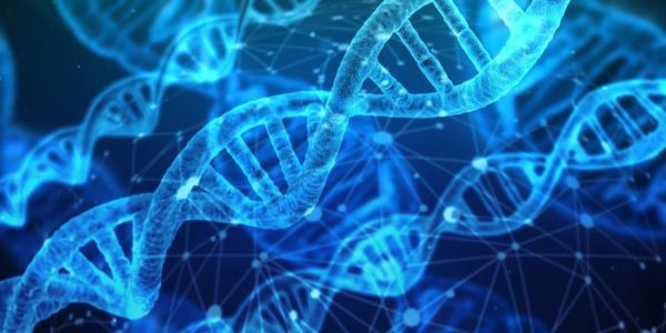 Обнаружен ген, продлевающий женственность