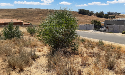 Vacant  Land For Sale in Tafelzicht, Malmesbury