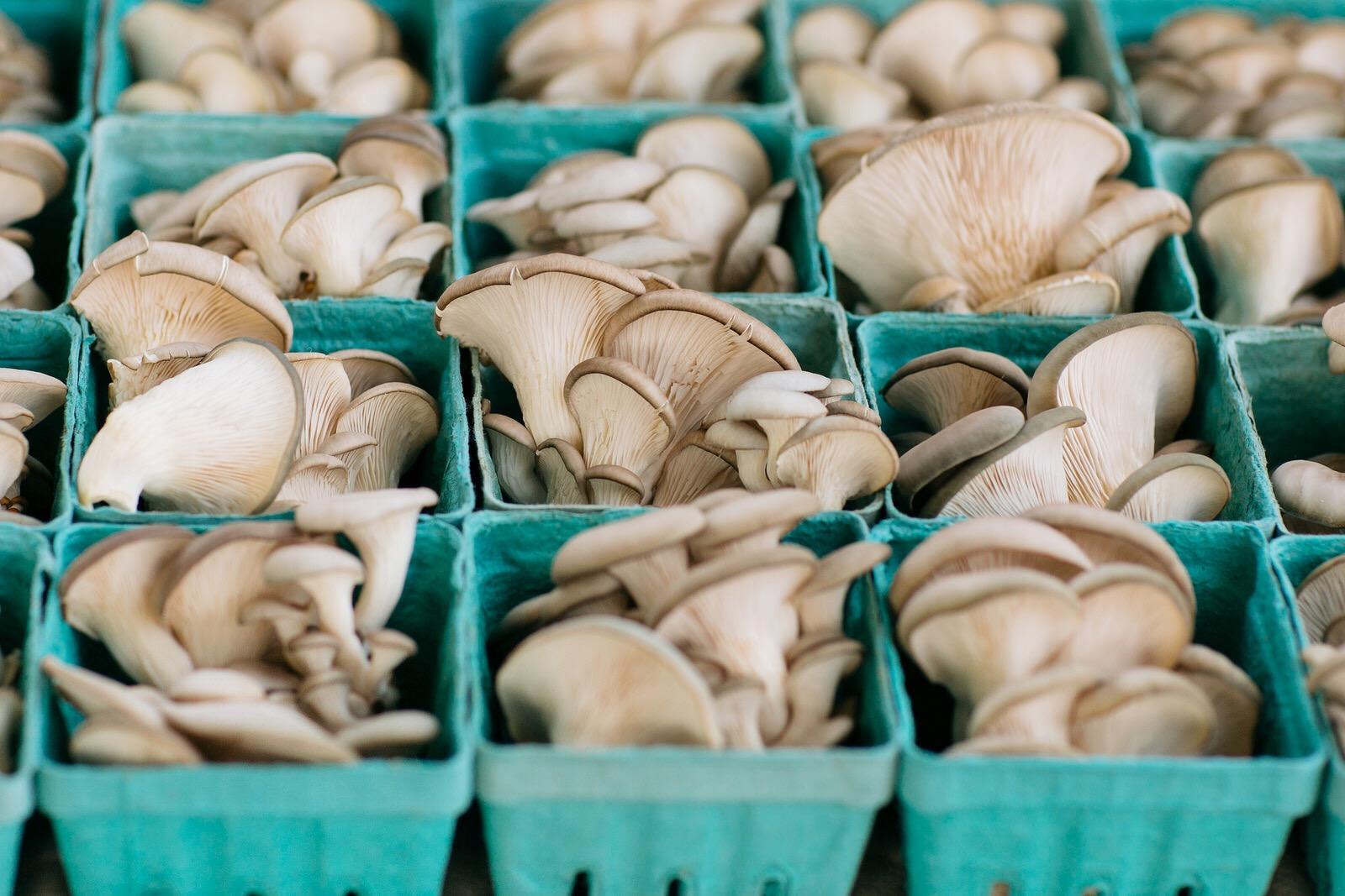 mushroom immune boosters