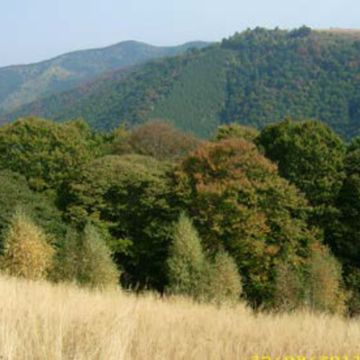 Private Hiking Tour in the Carpathian Mountains from Paltinis