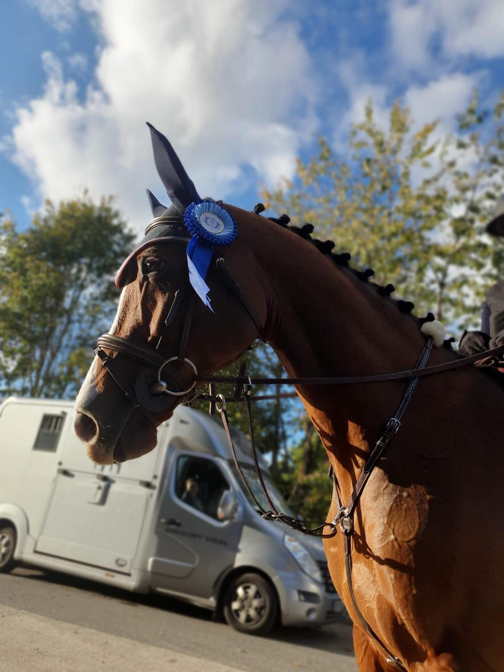 photo de couverture -Clb Sporthorses