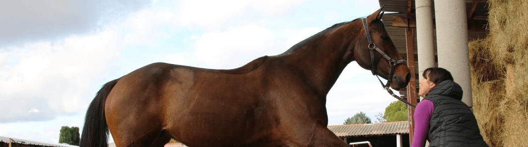 photo de couverture -Delphine Vandecasteele - Masseur Equin