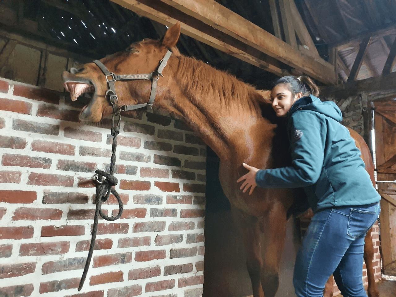 photo de couverture -Equid'Opale-Masseur Equin et Canin