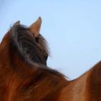 photo de profil aisance-equine
