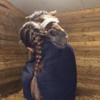 photo de profil capucine-mareau-osteopathe-animalier