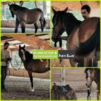 photo de profil centre-equestre-le-petit-baste