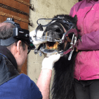 photo de profil dentiste-equin-vet-osteo