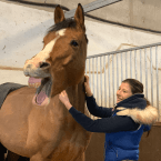 photo de profil equine-harmonie-shiatsu-equin