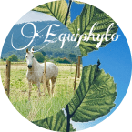 photo de profil equiphyto