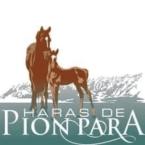 photo de profil haras-de-pion-para