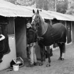 photo de profil horses-tallec-services