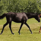 photo de profil les-chevaux-de-penhoat