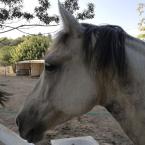 photo de profil m-shiatsu-equin